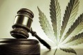 Legalizzare la Cannabis in Italia