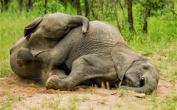 Gli animali più viziosi del mondo